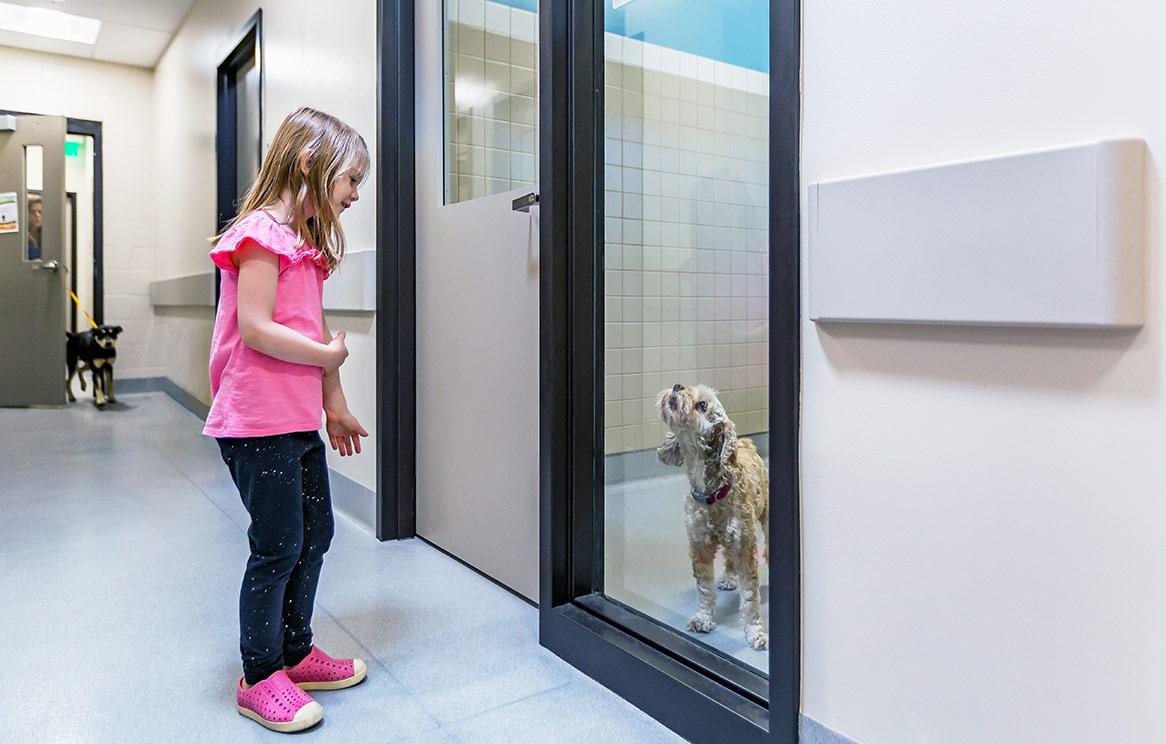 El Cajon Animal Shelter Dog Meet and Greet