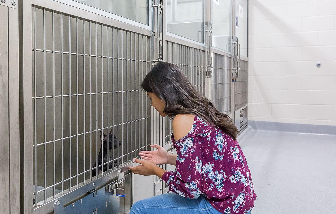 El Cajon Animal Shelter Puppy Palace